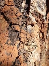 Clay in a split tree trunk