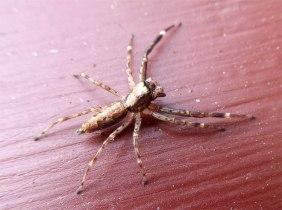 spider-skinny