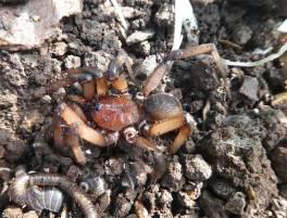 Nasty looking spider