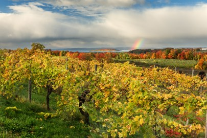 Fall colors, rainbow, vineyard, and island views - Traverse City, Michigan's Old Mission Peninsula must be the rumored pot of gold