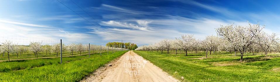 Michigan-cherry-orchard-bloom-spring-05166057