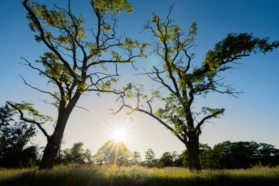 The sun shines brightly between two backlit locusts trees on the summer solstice