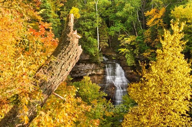 Photo: Chapel Falls waterfall, viewed between fall trees