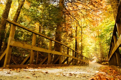 Photo: Low angle view of a trail in the fall woods in Michigan's Upper Peninsula