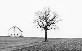 Photo: single barn and tree black and white