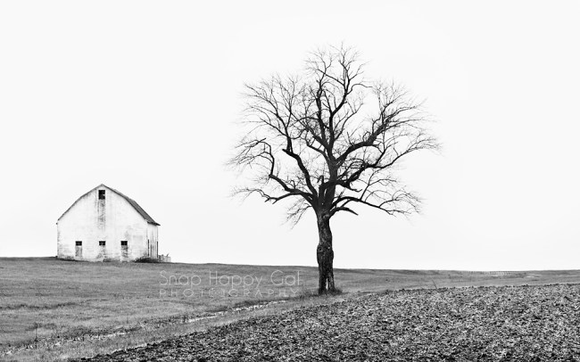 Photo: single barn and tree black and white