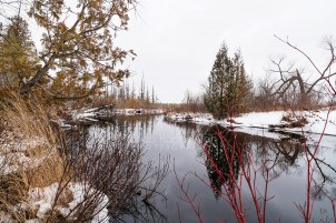 Photo: winter reflections along a river