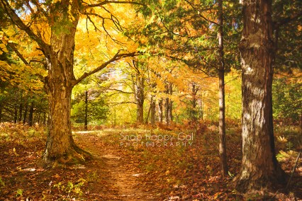 Photo: trees flank fall pathway/trail in the woods
