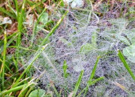 water droplets on a ground web