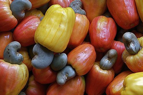 beto_frota-cashews-Colors-nose-cool-flickr-photos-images