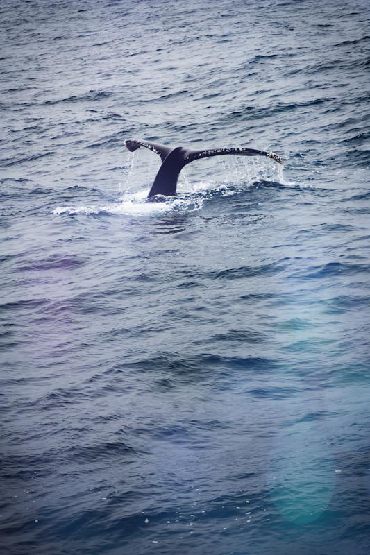 Whale Tale in California