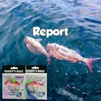 port phillip bay snapper report,