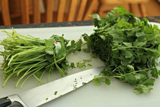 Spicy Cilantro Pesto Recipe | SnappyGourmet.com