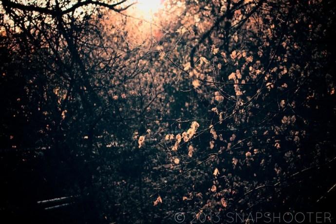 © 2013 snapshootergeb.wordpress.com