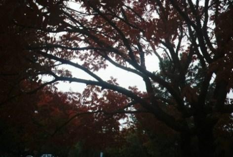 trees4.jpg