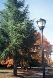 trees9.jpg