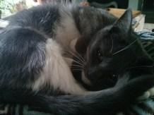 curled_marley_closeup
