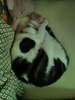 curled_snoop_2