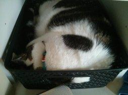 snoopy_basket