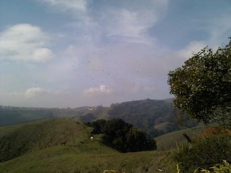 hills_birds.jpg