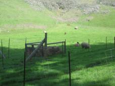 farm_sheep.jpg