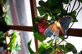 flowes_butterfly.jpg