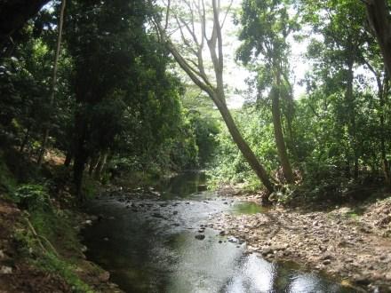wailua_hike_stream.jpg