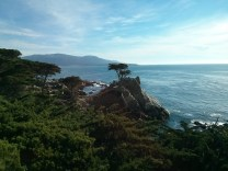 17_mile_drive_lone_cypress