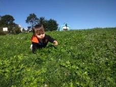 field_crawling