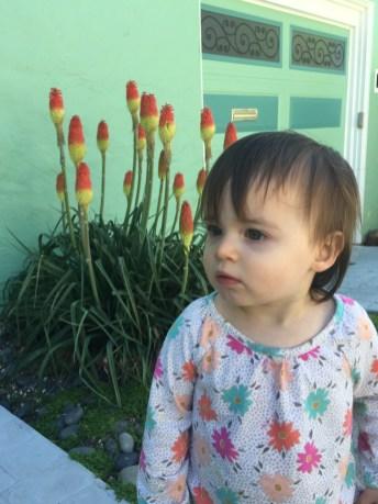 sidewalk_tulips