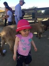 zoo_goat