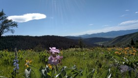 victor_hike_meadow_1