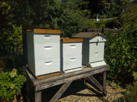 small_table_farms_beehives