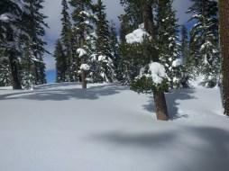 snow_trees_1