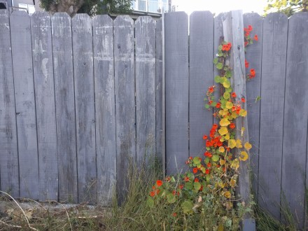 dirt_road_fence_ivy