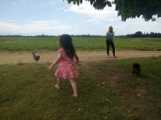 farm_chickens_4