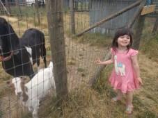 farm_goats_2
