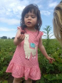 farm_picking_strawberries_4