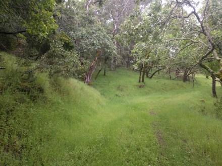 grass_trail