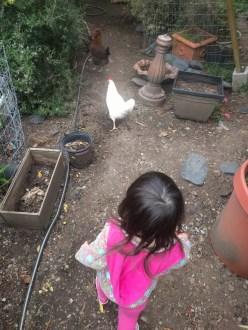 neighbors_chasing_chicken