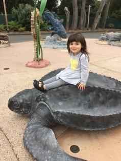 zoo_playground_turtle