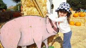 cutout_pig