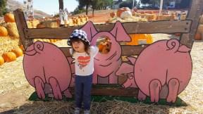 cutout_pigs