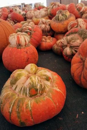 pumpkins_7