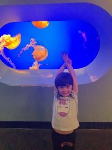 cal_academy_aquarium_brooke