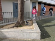 playground_ledge