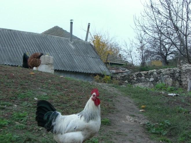 Orheiul Vechi town, Moldova.