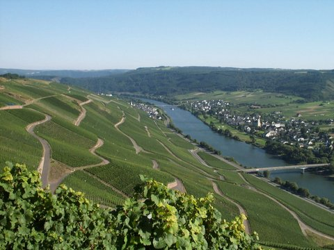 Mosel from the Erdener Treppchen