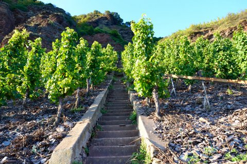 A view of a vineyard staircase cut into the Erdener Treppchen site.