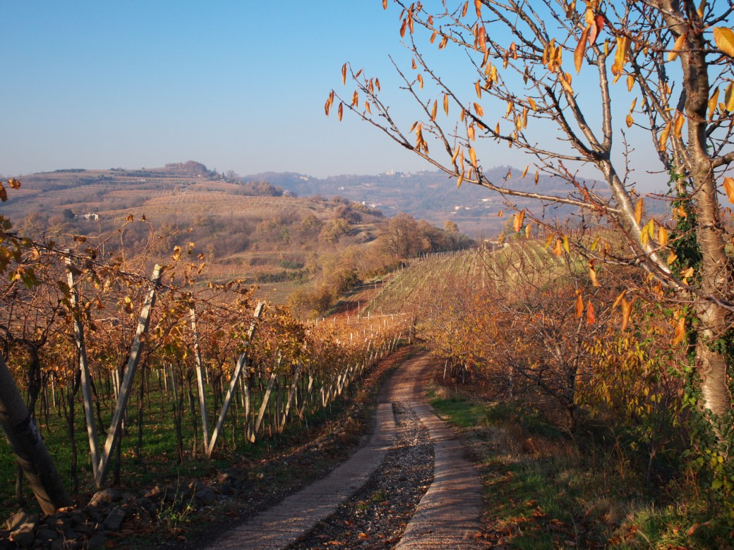 Road and vineyards